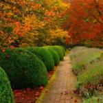 Как правильно создать живую изгородь
